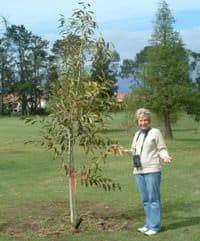 Women's Golf donates a tree to Paarl Golf Club